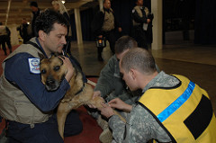 U.S. Army Staff Sgt. Travis Lausier, right, and Spc. Jason Hayes, both from the Japan District Veterinary Command, Misawa Branch, draw blood from Lago, while his handler, Tim Dinges, comforts his partner. Dinges and Lago are attached to the Fairfax County Fire and Rescue Department, Virginia Task Force 1 and arrived at Misawa Air Base to take part in search-and-rescue efforts in Sendai, Japan. The vets will run a fluorescent antibody viral neutralization test to determine the dog's rabies antibody titer so they can verify the dog is in compliance with the government of Japan's strict regulations for entry into the country.