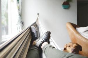 hammock-dog-relax